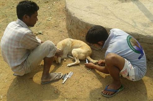 Animal Shelter 3.jpg