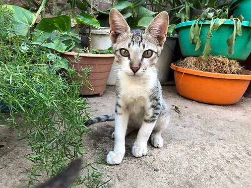 Kit - Kat