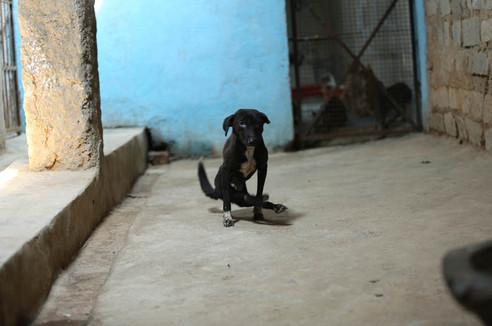 Animal Shelter 2.jpg