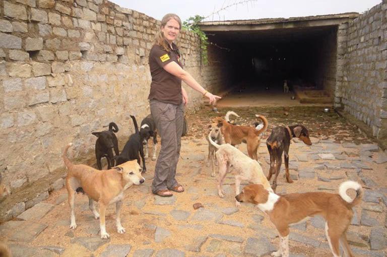 Animal Shelter 4.jpg