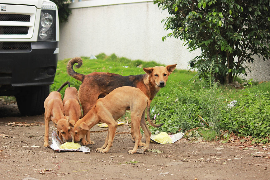 Donation Page Photo.jpg