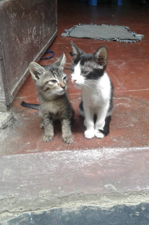 Two kittens for adoption