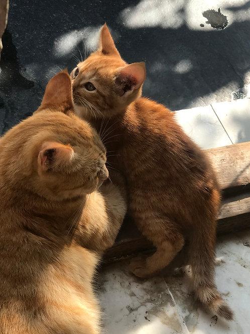 2 kittens for adoption