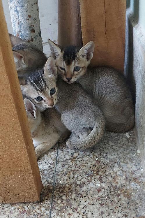 5 kittens Ranchi