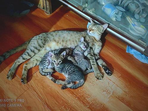 3 little & healthy kitten
