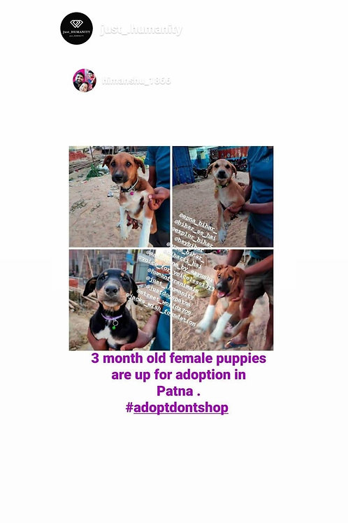 Puppies for adoption in Patna