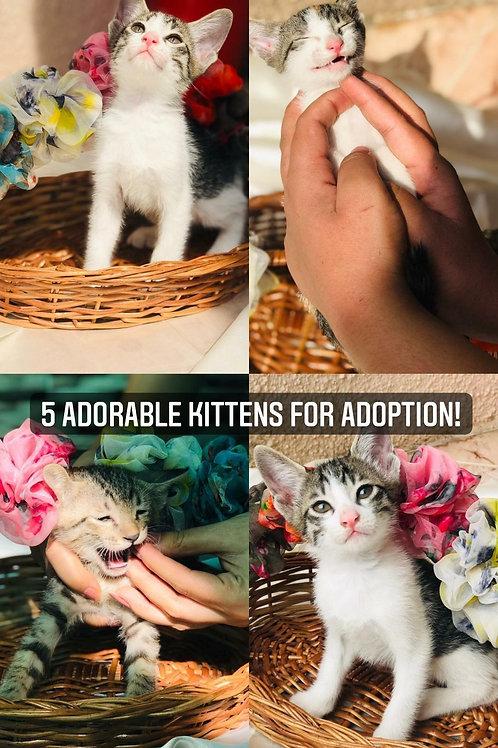 5 kittens for adoption