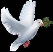 colombe-slider.png