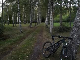 Fösa kor med cykel