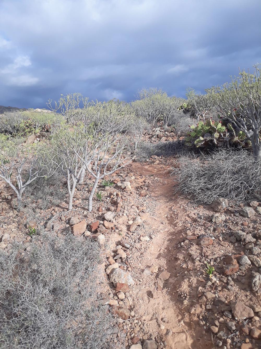 Stigen upp till Montaña de Guaza