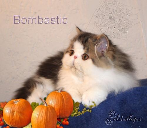 bombi5 monate