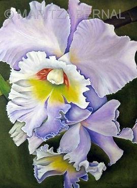 Orquidea Colombiana.jpg