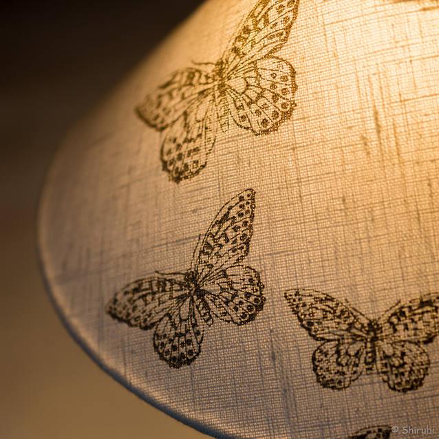 Zoom sur les papillons