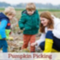 Pumpkin Picking Website.png