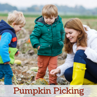Pumpkin Picking Website.png
