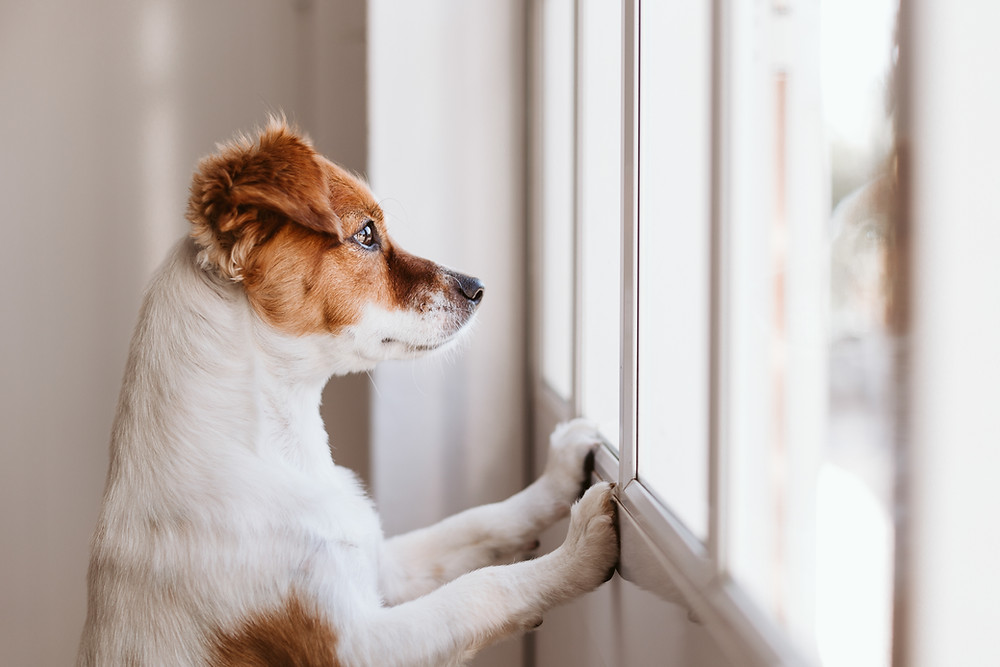 a dog showing intuition and psychic senses