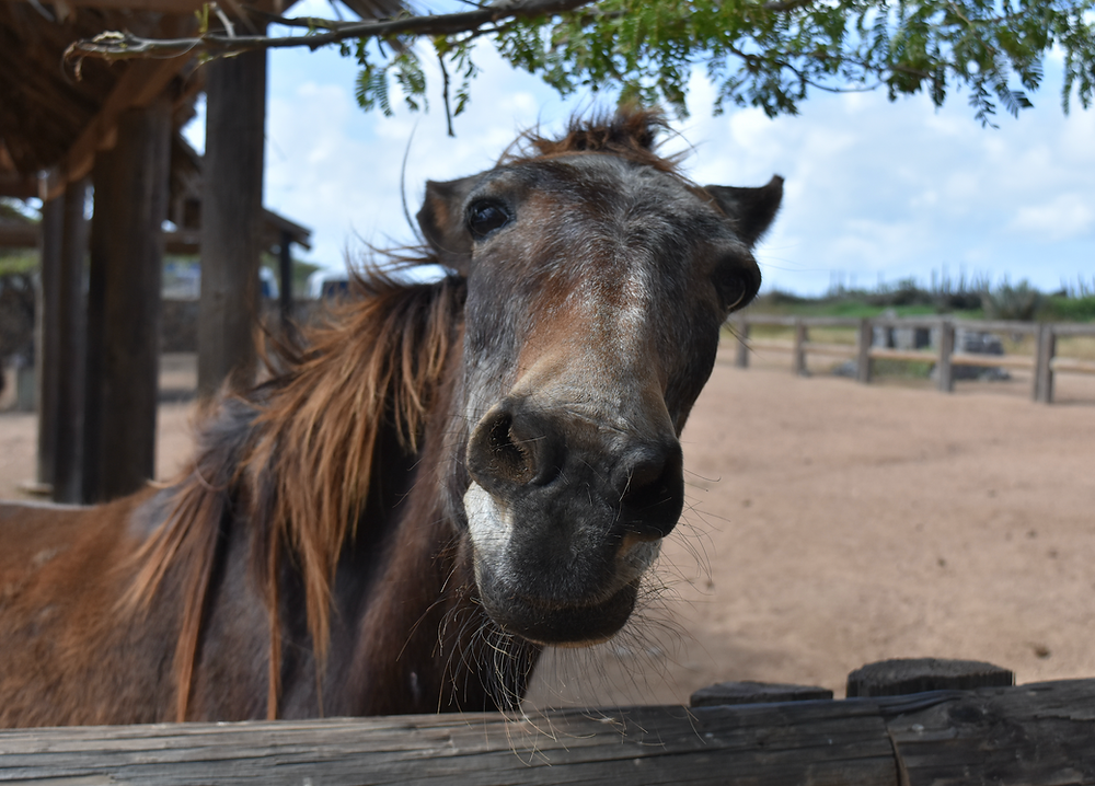 horse face close up