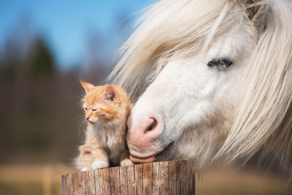 animal communication with a horse and cat loving energy