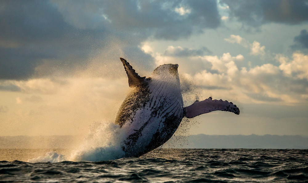 whales inspire intuitive animal communication
