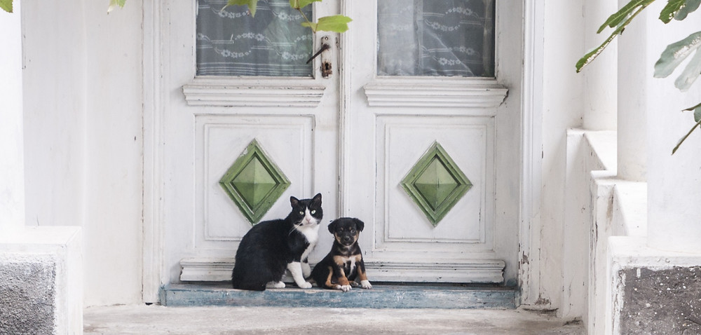 animal communication between a cat and dog
