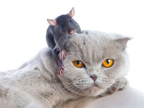 Of Mice and Miracles