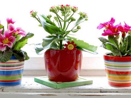 Çiçek Bakımında Püf Noktaları Nelerdir?