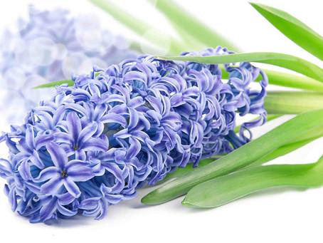 Burçlara Göre Çiçek Seçimi