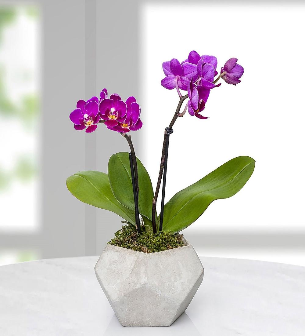 orkidelerin bakımı hakkında önemli ip uçları