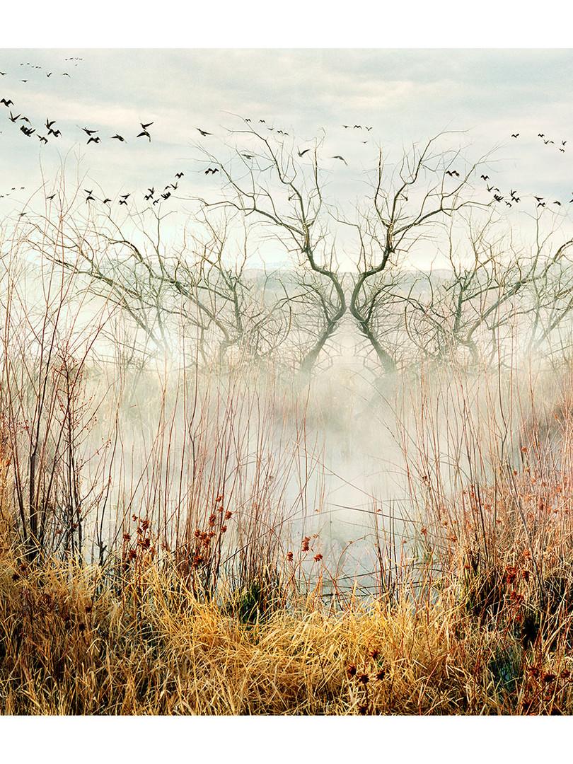 Migration.web.1644.jpg
