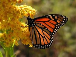 santuario de mariposas monarca