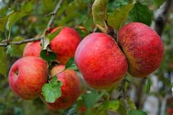 zacatlán de las manzanas