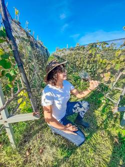 ruta del vino queretaro