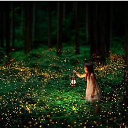 Santuario de luciérnagas