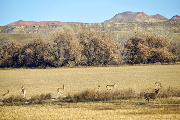 Deer in Field Moving.jpg