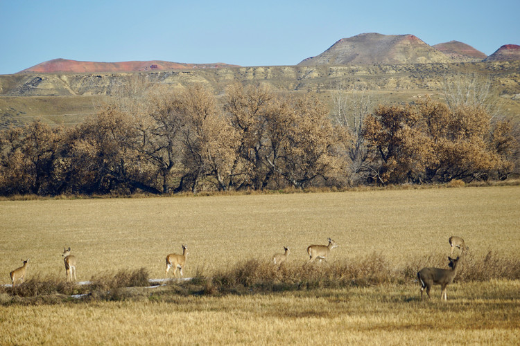 Deer in the foreground_