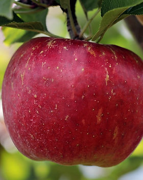apple-2788616_1920_edited.jpg