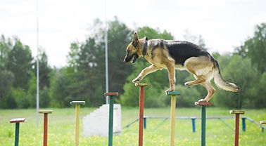 training of a police dog.jpg