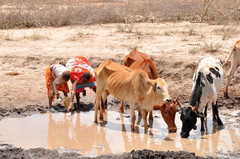 cows&people.jpg