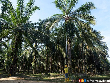 End the greenbashing of palm oil, critics told