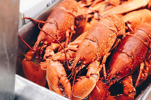 lobsters ready to be cooked.jpg