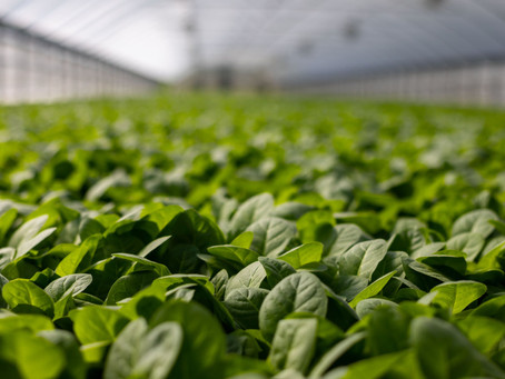 Agriculture's strong appetite for growth attracts M&A