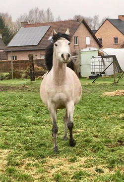2018 6 months in foal