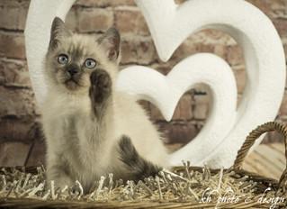 11 Wochen ... heute ist internationaler Weltkatzentag!