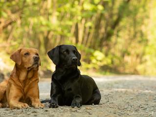 Dogs - Workshop von Regine Heuser