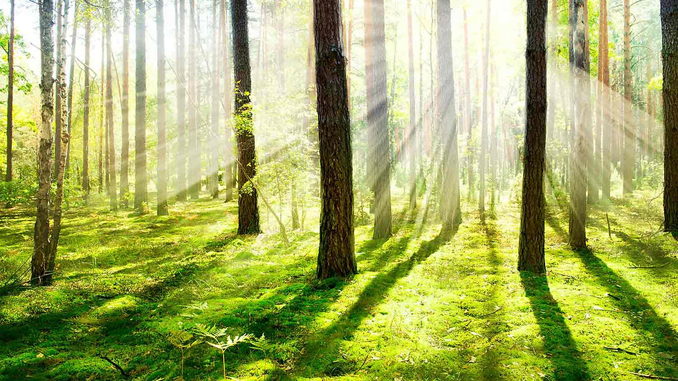 Enchanted Forest Wax Melt