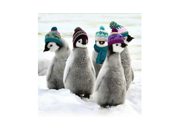 Penguins in hats - Pack of 10 cards