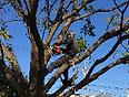 樹木の剪定