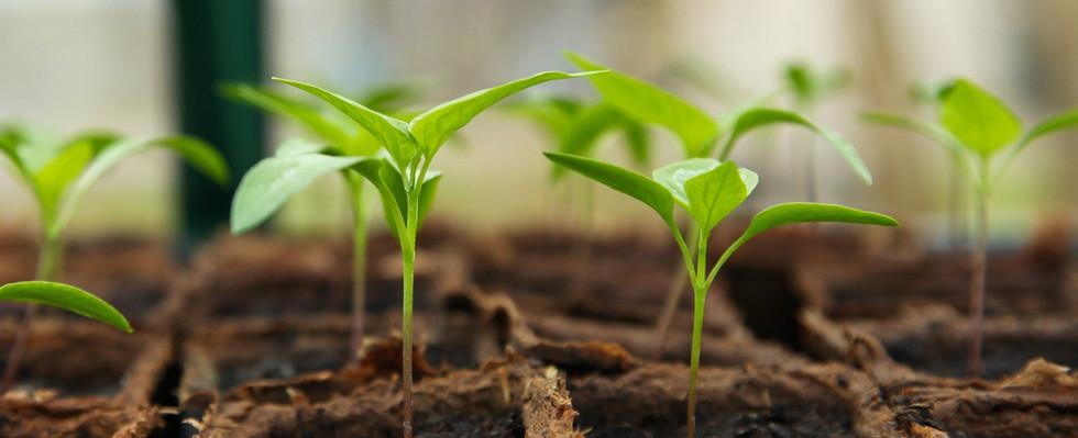 seedling-5009286_1920.jpg