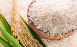 indian-short-grain-raw-rice-947