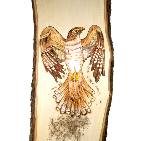 Natasha Stoppel | Red Tailed Hawk